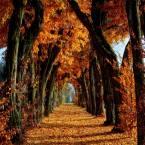 تصاویر فصل پاییز
